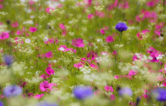 цветущий природный луг