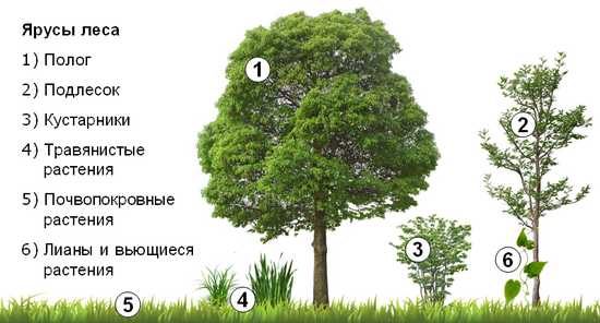 urovni-lesa