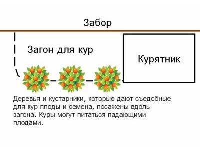permakultura-princip-otnositelnogo-raspolozhenia