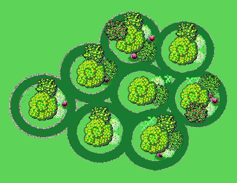 Рисунок 2. Схема посадки колонновидных яблонь