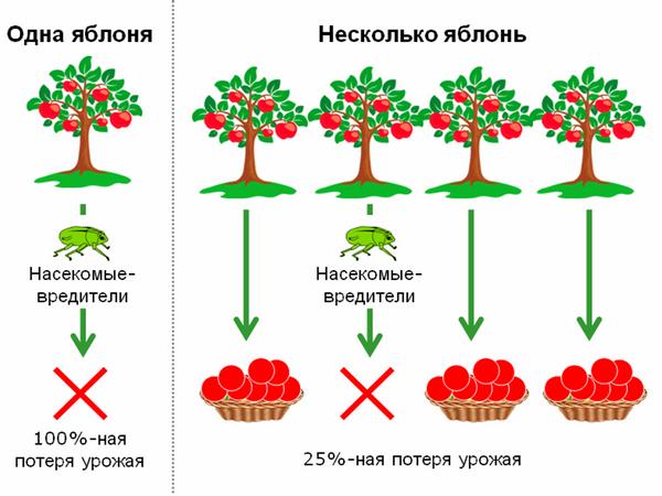 Наличие нескольких экземпляров каждого растения повышает шансы получить урожай