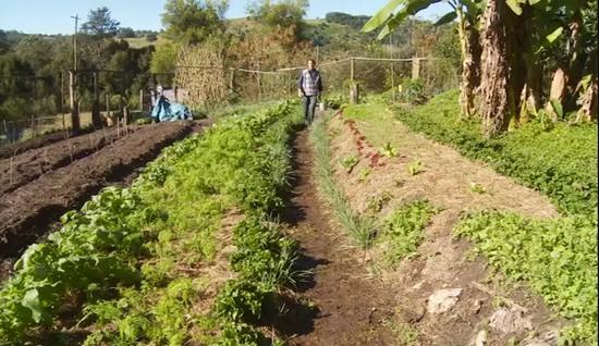 permakultura-permakulturnye-pochvy-geoff-lawton-14