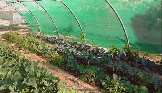 permakultura-permakulturnye-pochvy-geoff-lawton-20
