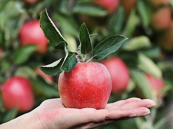 plodovito