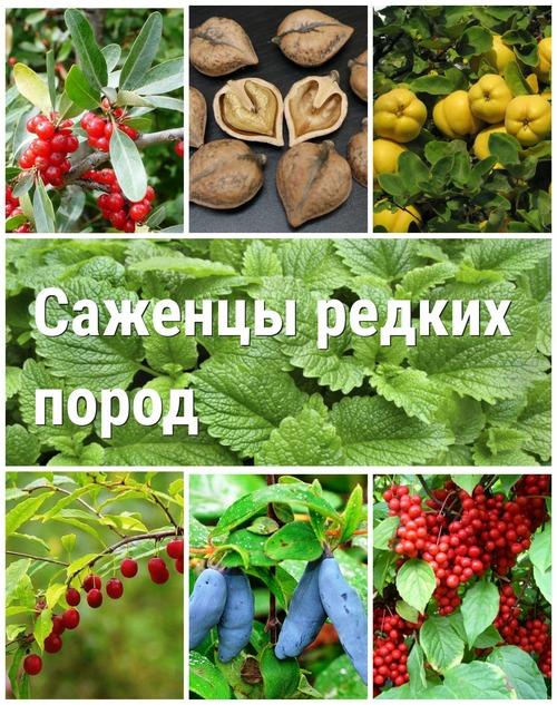 pitomnik-rasteniy-moskva/