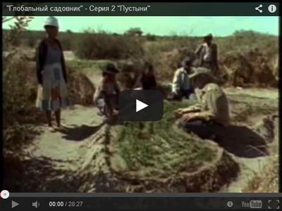 bill-mollison-globalnyi-sadovnik-pustyni
